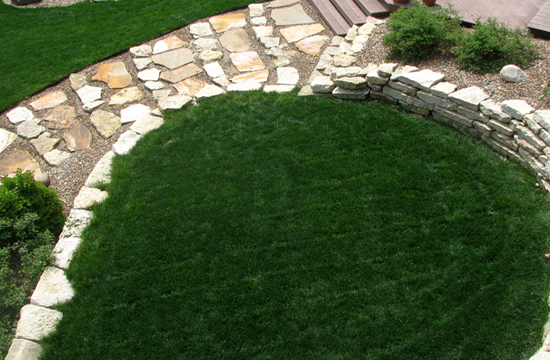 BASIC LAWN - BEFORE