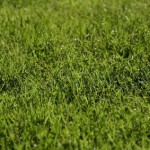 The Grass Can be Greener on your Side: Drought Tolerant Lawns