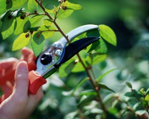 Why and When To Prune Properly